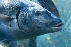 Ampuły ryba w bąblach fotografia stock