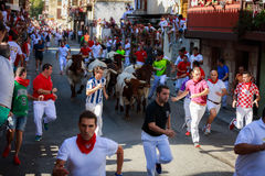 AMPUERO, SPAIN - SEPTEMBER 10: Bulls and people are running in street during festival in Ampuero, celebrated on September 10, 2016. In Ampuero, Spain Royalty Free Stock Image