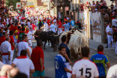 AMPUERO, SPAIN - SEPTEMBER 10: Bulls and people are running in street during festival in Ampuero, celebrated on September 10, 2016 Royalty Free Stock Images