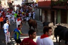 AMPUERO, SPANIEN - 10. SEPTEMBER: Stiere und Leute laufen in Straße während des Festivals in Ampuero, am 10. September 2016 gefei Lizenzfreie Stockfotografie