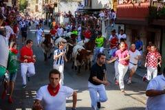 AMPUERO, SPANIEN - 10. SEPTEMBER: Stiere und Leute laufen in Straße während des Festivals in Ampuero, am 10. September 2016 gefei Lizenzfreies Stockbild