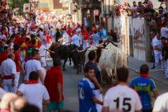 AMPUERO, SPANIEN - 10. SEPTEMBER: Stiere und Leute laufen in Straße während des Festivals in Ampuero, am 10. September 2016 gefei Lizenzfreie Stockbilder