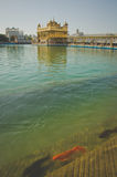 amritsar guld- tempel arkivfoto