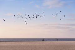 Amrum海滩  免版税库存照片