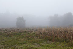 Amrum (Alemanha) - ajardine na névoa Imagens de Stock Royalty Free