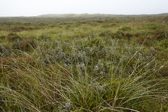 Amrum (Germany) - North frisian landscape Royalty Free Stock Images