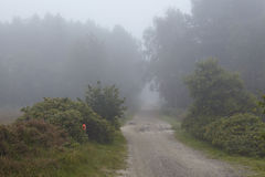 Amrum (Germany) - Path at fog Royalty Free Stock Image
