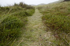 Amrum (Germany) - Path through grass-covered sand dunes Royalty Free Stock Photo