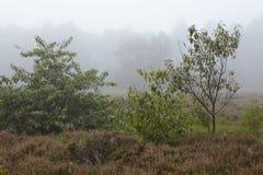 Amrum (Niemcy) - krajobraz przy mgłą Obrazy Stock