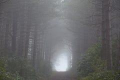 Amrum (Niemcy) - las przy mgłą Zdjęcie Royalty Free