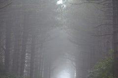 Amrum (Niemcy) - las przy mgłą Obraz Royalty Free