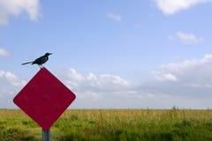 Amsel, die über Verkehrsrotzeichen steht Stockfotografie