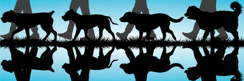 Amstaff, Presa Canario, Labrador and Caucasian Shepherd silhouet Stock Photos
