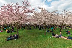 Amstelveen japanese garden picnic season