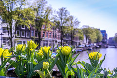 Amsterdam Stock Fotografie