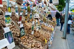 28 Amsterdam-APRIL: De kleine winkel biedt verschillende soorten bollen op de de Bloemmarkt van Amsterdam op aan 28,2015 April Stock Foto