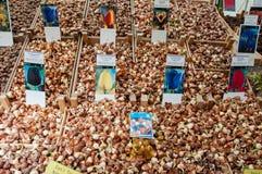 28 Amsterdam-APRIL: Verschillende soorten tulpenbollen op de de Bloemmarkt van Amsterdam op 28,2015 April, Nederland Stock Fotografie