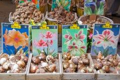 28 Amsterdam-APRIL: Winkel binnen van de drijvende bollen van aakvertoningen voor verkoop op de de Bloemmarkt van Amsterdam op 28 Royalty-vrije Stock Afbeelding