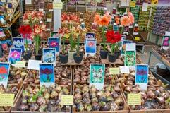 AMSTERDAM 28 AVRIL : Les ampoules des plantes d'intérieur sur la fleur d'Amsterdam lancent en avril 28,2015 sur le marché, Pays-B Photographie stock libre de droits