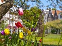 amsterdam begijnhof sądu tulipany Zdjęcie Stock