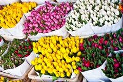 Amsterdam bloeit markt stock foto's