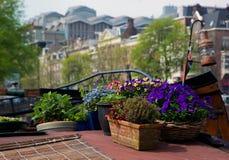 Amsterdam. Bloemen op een boot stock afbeelding