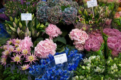 amsterdam blommamarknad Arkivfoto