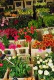 amsterdam blommar försäljning Arkivfoto