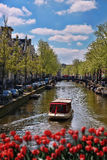 Amsterdam city with boats on canal against red tulips in Holland Royalty Free Stock Photography