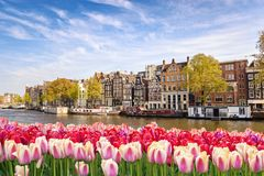 Spring Tulip in Amsterdam Netherlands Royalty Free Stock Photography