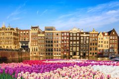 Amsterdam Netherlands. Amsterdam city skyline at canal waterfront with spring tulip flower, Amsterdam, Netherlands Stock Images