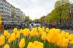 Amsterdam cityscape with tulips on the foreground, the Netherlands. Royalty Free Stock Images