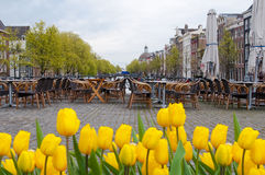 Amsterdam cityscape with tulips on the foreground and outside cafe on the background, Holland. Stock Photo