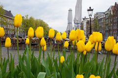 Amsterdam cityscape with tulips on the foreground and outside cafe on the background, the Netherlands. Stock Photos