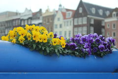 Amsterdam. The contrast between the colored flowers and the Amsterdam architecture Royalty Free Stock Photography