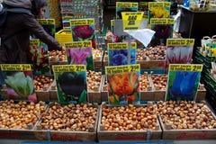 Amsterdam, die Niederlande - 30. Juli 2011: Vieltulpen-Birnen selli Stockbild