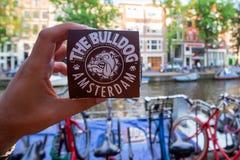 AMSTERDAM, DIE NIEDERLANDE - 10. JUNI 2014: Hand hält Marihuanakleinen kuchen von der Bulldoggenkaffeestube Stockbild