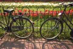 Amsterdam-Fahrräder und Tulpen Lizenzfreies Stockbild