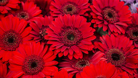 Macro Pictures of Flowers Stock Images