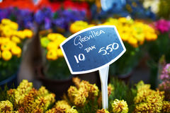 Amsterdam flower market Royalty Free Stock Photography