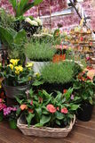 Amsterdam flower market. A shop full of different flowers Stock Photography