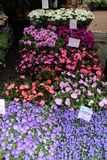 Amsterdam flower market. A shop full flowers of various colors Stock Photo