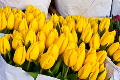 Amsterdam flowers market Royalty Free Stock Photos
