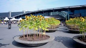 Amsterdam-Flughafen Schiphol, die Niederlande, stock video