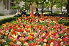 Amsterdam garden tulips. Tulips blooming in the Amsterdam spring in a public garden in front of chilling pedestrians Royalty Free Stock Images
