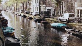 amsterdam holandie rzeka z wodnymi ptakami i łodziami Cudowna sceneria dzicy łabędź i kaczki w jesieni miasta plase zbiory wideo