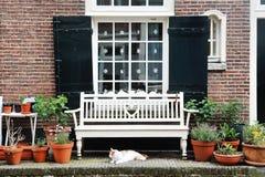 Amsterdam, Holland, Europa - eine Gebäudefassade, ein Fenster, eine weiße Bank und eine Katze Lizenzfreie Stockfotos