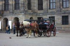 Amsterdam, internationale toeristenbestemming Twee paarden trekken een vervoer en de koetsierpraatjes met een vriend die hij toev stock afbeeldingen