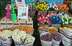 Amsterdam - Kleurrijke tulpen in de luchthaven van Amsterdam Schiphol Stock Afbeeldingen