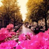 Amsterdam kwiaty Obrazy Stock